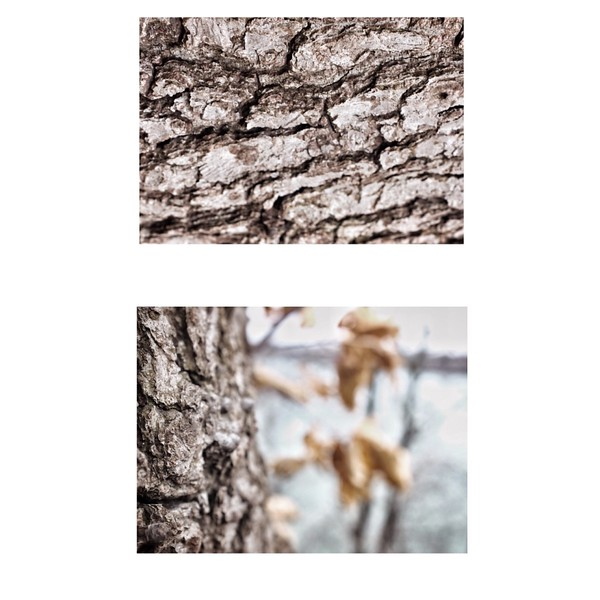 April 5 NOTL<br /> <br /> Travel, trees and textures