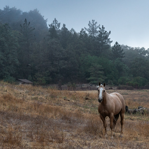 Lone horse, standing in a field at dawn