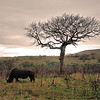 Rhino Tree - South Africa