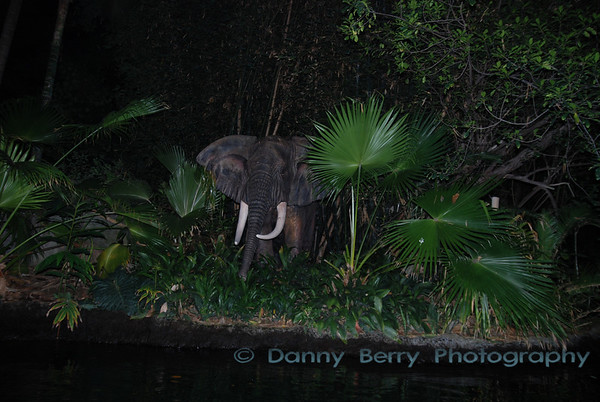 Jungle cruise at night.