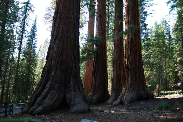 Yosemite National Park - Sequoias