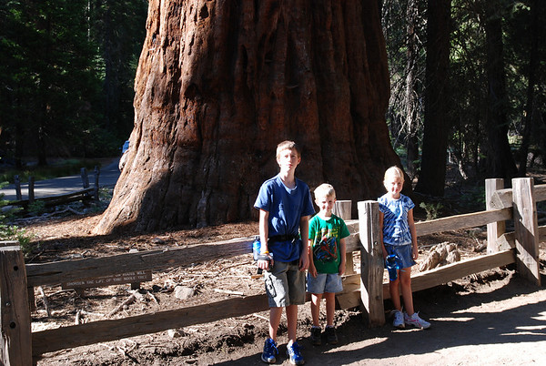 Sam, Shelden, & Sydney enjoying a pose. Yosemite National Park - Sequoias