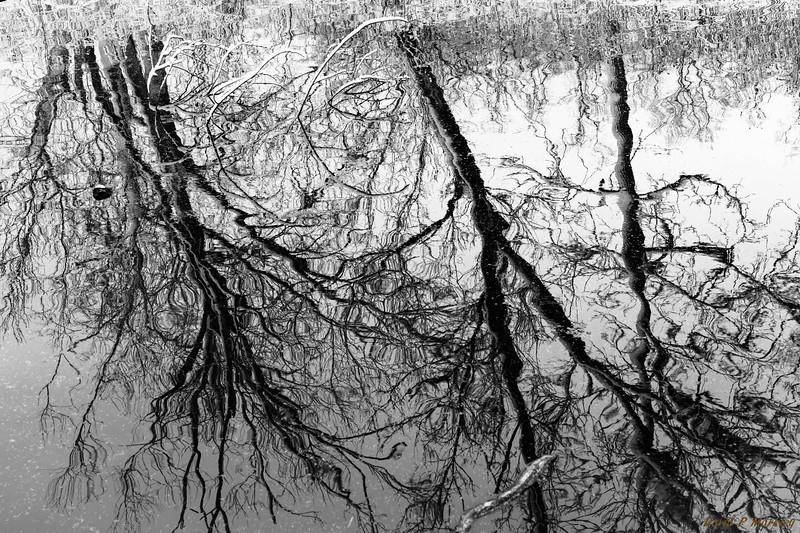 Tree Strokes