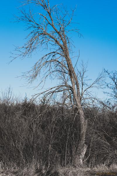 Tree Sway