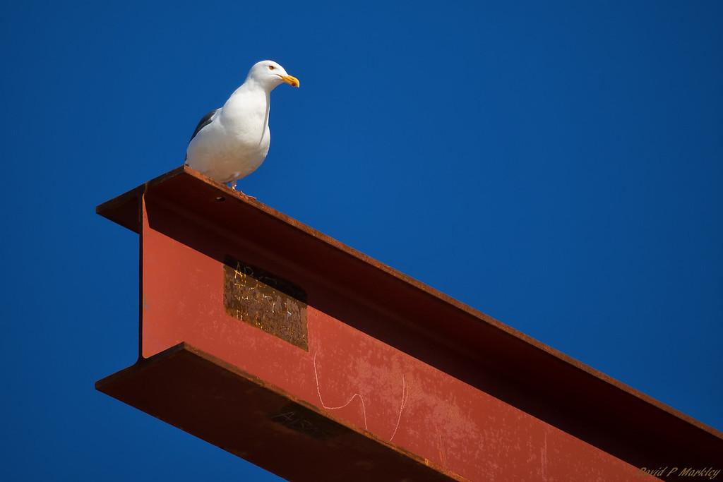 Beaming Bird