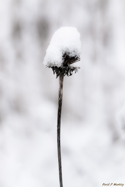 Frost Cap