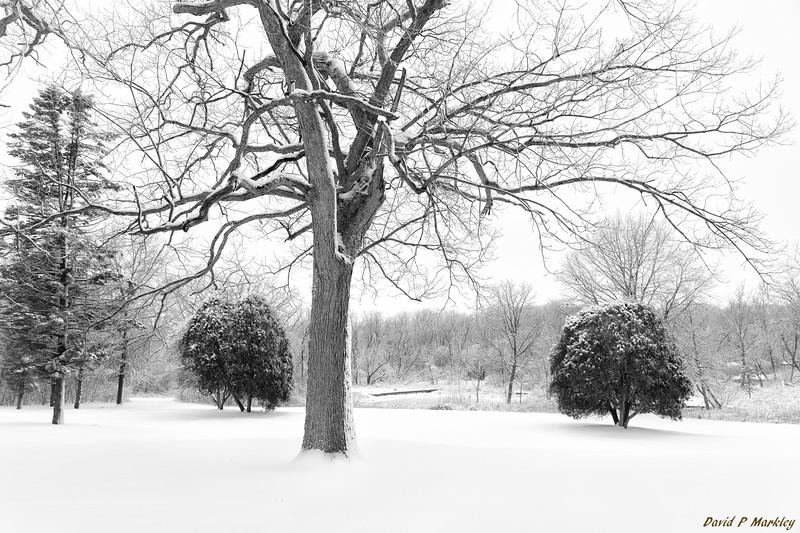 Pristine Snow