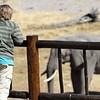 Elephant Gazing