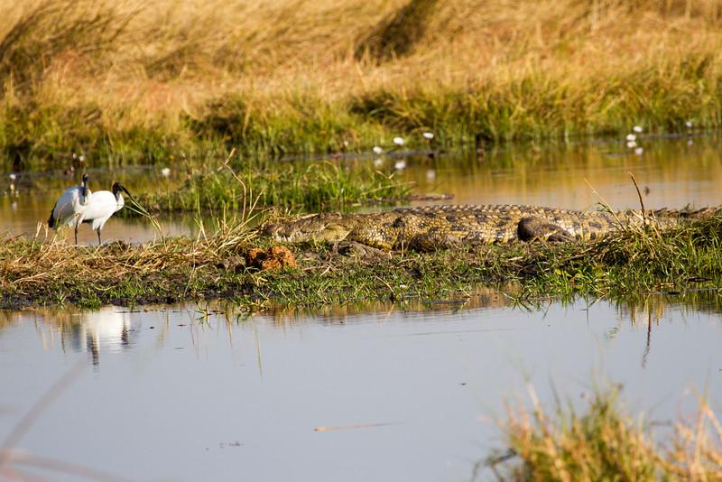 Happy Crocodile...