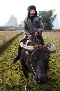 IMG_Farmer Oxen 1