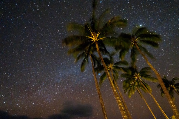 Palms and the Milky Way