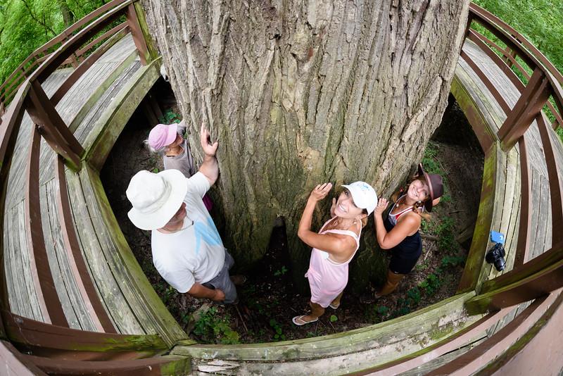 Tree Huggers 1