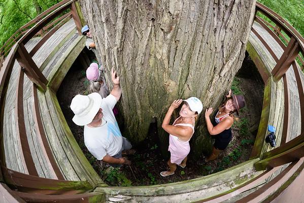 Tree Huggers 2