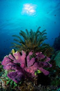 Coral and crinoid
