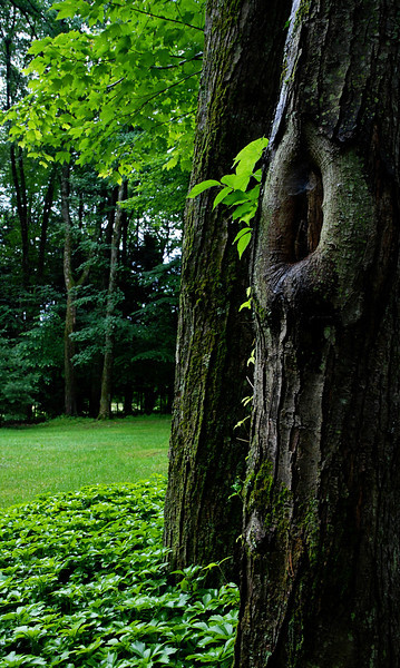 Tree<br /> Woodstock, New York