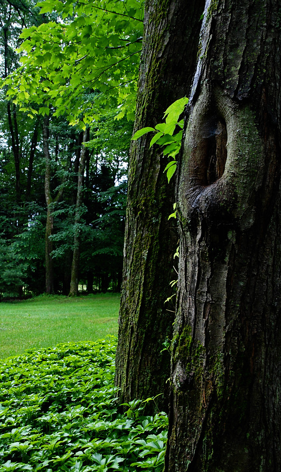 Tree<br /> Woodstock, New York