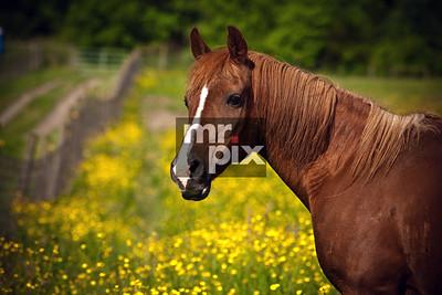 Animal Photography - Horses