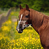 Animal Photography - Horses