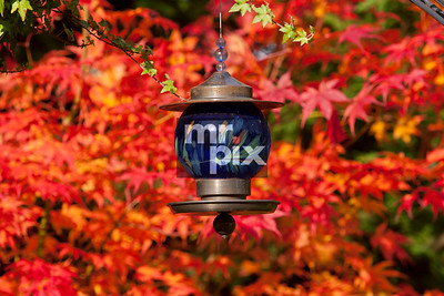 Colour of Autumn and the Blue Bird Feeder, captured by Michael Moore | MrPix.com