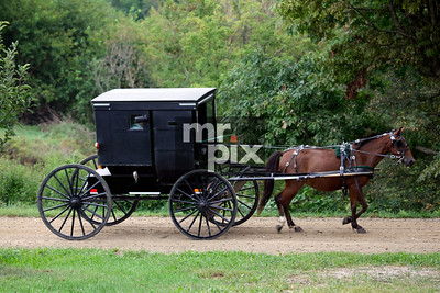 Horse and black buggy (the war wagon) in Amish country in Berlin, Ohio - Lifestyle