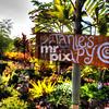 Janie's Therapy on the BIG ISLAND, in Kona Hawaii