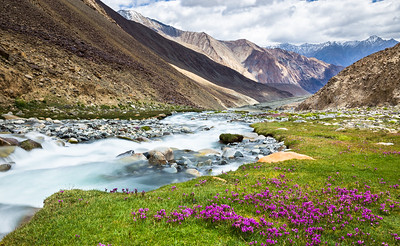 As snow melts in summer, streams are full and flowers bloom. I spotted this location on my way to Pangong. But it was raining. So promised to stop here while returning. And am glad I did !!