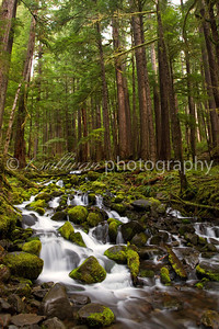 Mossy Waterfall, Olympic National Park