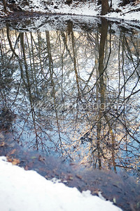 Snow covered trees reflected in a small pond one cold winter morning.