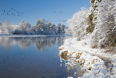Snow covers the banks of Lake Shenandoah as a flock of geese flies overhead.