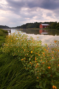 Orange jewelweed lines the banks of Lake Shenandoah in late Summer.