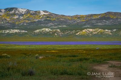 Purple, Carrizo Plain