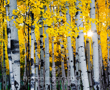 Aspen Autumn Afternoon
