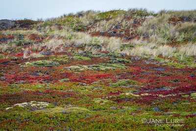 Point Reyes Colors