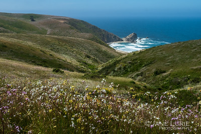 Wildflowers and Cove, Point Reyes