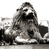 """Guarding Trafalgar Square""<br /> <br />   © Copyright  Ken Welsh"