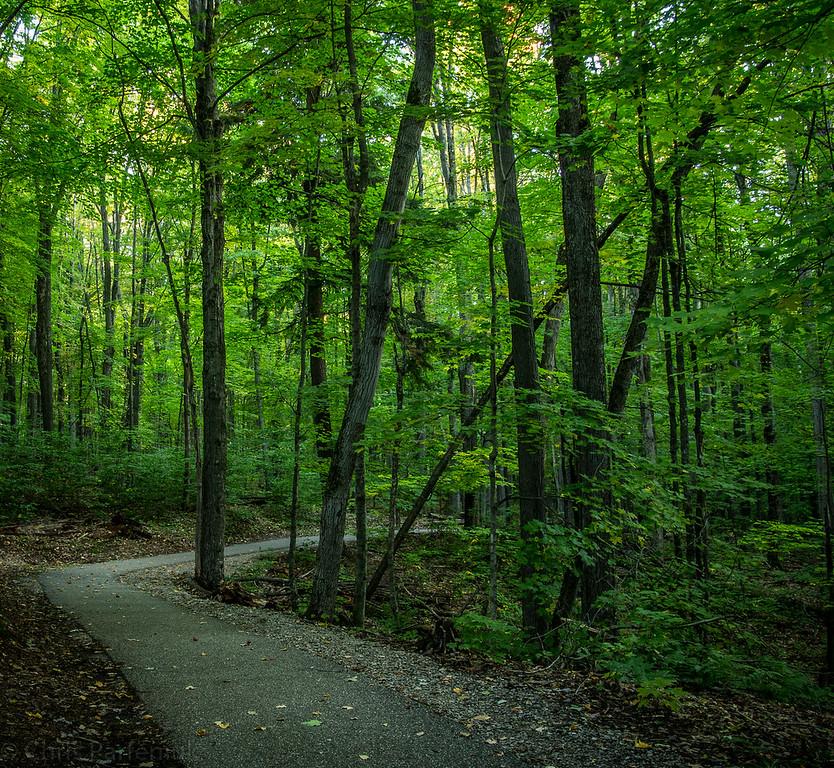 Hartwick Pines Trail