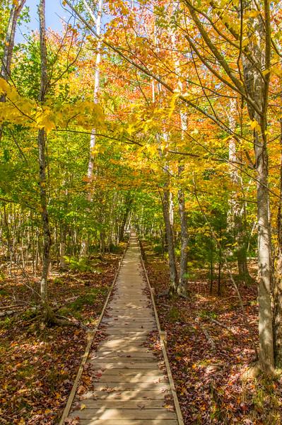 Jesup Trail, Bar Harbor, Maine