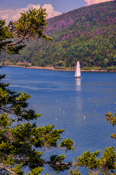 Somes Sound View, Acadia National Park, Maine