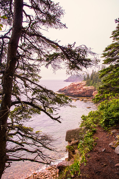 Foggy Park Loop Road View, Acadia National Park, Maine