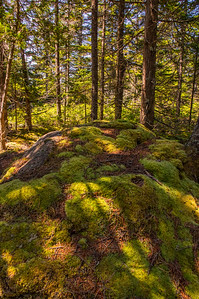 Flying Mountain Loop Trail Moss, Acadia National Park, Maine