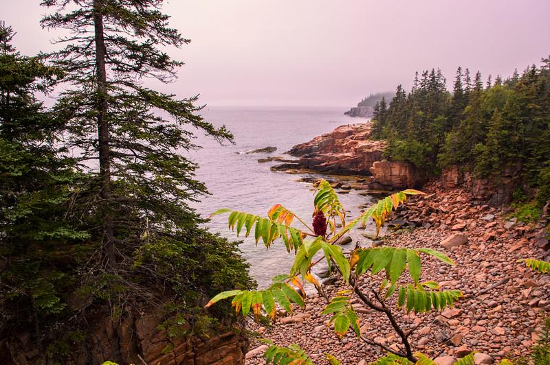 Foggy Park Loop Road View 2, Acadia National Park, Maine