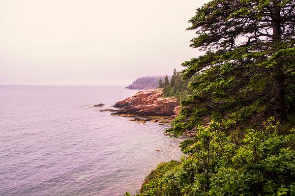 Foggy Park Loop Road View 4, Acadia National Park, Maine