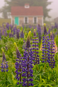 Ocean House Road Lupine Cottage, Cape Elizabeth, Maine