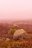 Fog on Caterpillar Hill, Sedgwick, ME 2