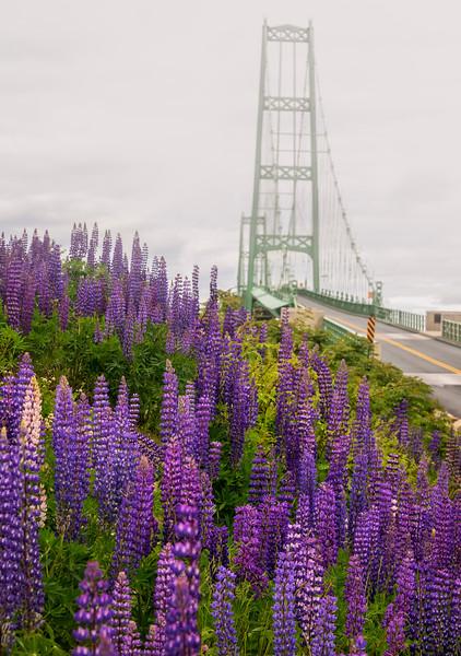 Deer Isle Bridge with Lupines in Fog