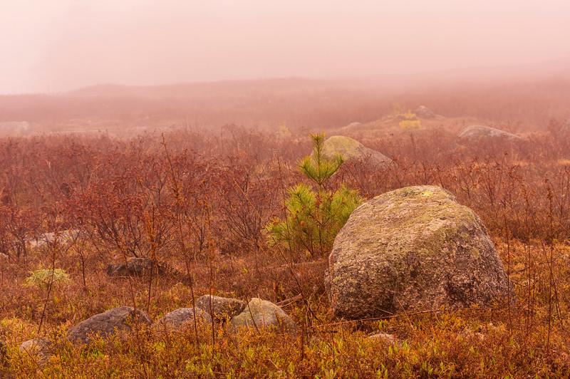 Fog on Caterpillar Hill, Sedgwick, ME