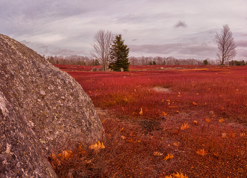 Blueberry Barrens in Autumn, panorama