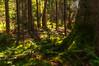 Deer Isle Woods, Maine