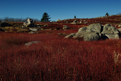 Sedgwick Blueberry Barrens, Maine