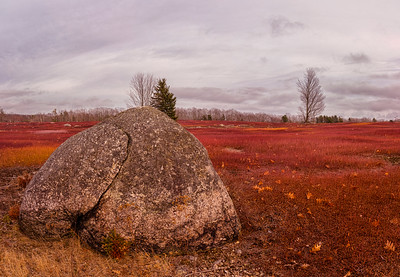Blueberry Barrens Panorama 2